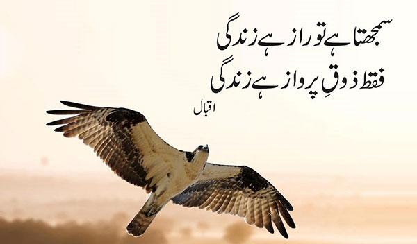 iqbal7